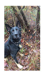 K-9 with located evidence (gun)