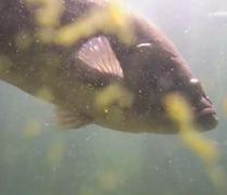 Underwater Bass